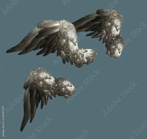 Angel wings isolated © vukkostic