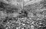 thin donkey waits at the garbage heap