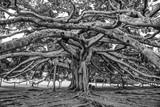 botanical Garden of Peradeniya, Kandy - 236147313