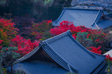 Roof of japanese house with the colorful of maple  at autumn season, traditional cityscape view from enkoji temple in kyoto, Japan.