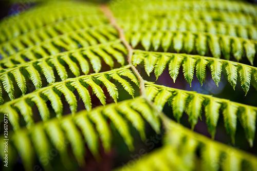 close up of green leaf background