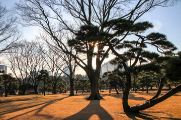 Trees in the Kokyo Gaien National Garden at the Imperial palace in Tokyo © marksteel