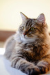 Quadro Cat pet portrait with selective focus.
