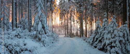Abendrot im Winterwald - 236241173
