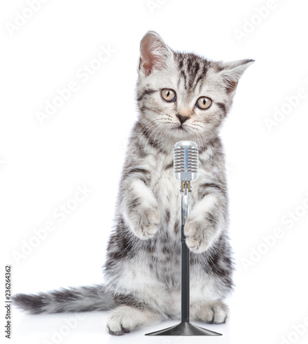 Kitten singing with microphone a karaoke song. isolated on white background - 236264362