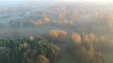 early morning golden autumn landscape with mist fog, aerial view - 236273180