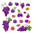 Vector illustration with violet fruits isolated on white.