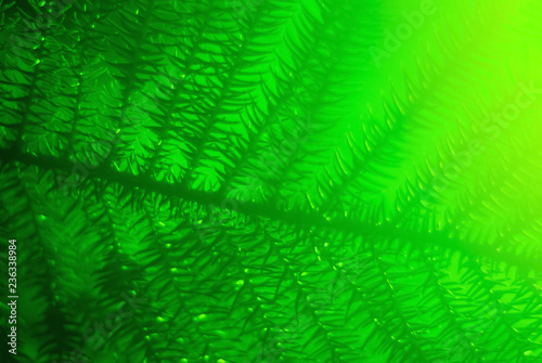 green blurred floral background with araucaria branch - 236338984