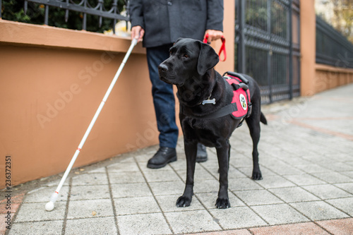 Guide dog helping blind man in the city.