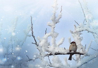 frozen sparrow on tree in cold winter