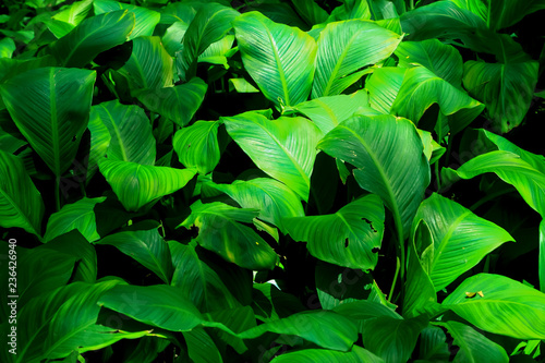 Green theme for background decoration. - 236426940