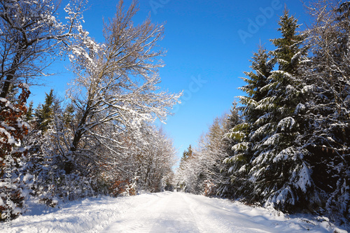 Winter trees and road in german forest with snow.