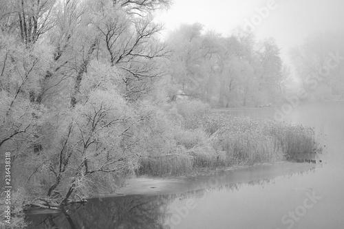 nebelig trübe winterlandschaft am see in Chorin mit raureif an den bäumen
