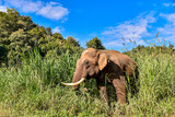 Asian Elephant It is a Big mammal.