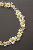 chamomile  daisy flower circle wreath on a gray dark textured background
