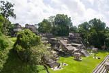 Mayan temples in Tikal, Guatemala, Central America  - 236474317