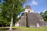 Mayan temples in Tikal, Guatemala, Central America  - 236474349