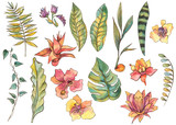 Watercolor set of exotic natural vintage watercolor blooming orchid flowers, banana leaves, monstera, palm. Tropical isolated natural elements on white background, greenery vibes - 236490198