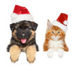 Cute puppy and kitten above banner