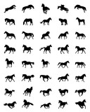 Black silhouettes of horses on a white background - 236498930