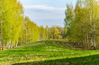 plain simple countryside spring landscape with fresh green meadows and forests - 236514577