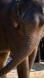 Dramatic photo of elephant