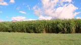 Tall grass swaying in the wind on a bright summer day. - 236545761