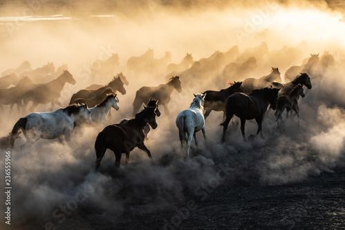 yilki horses