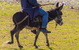 Man on donkey in spring steppe