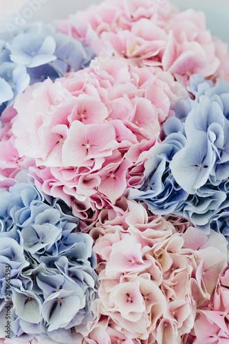 Piękny bukiet wiosny z przetargu różowe i niebieskie kwiaty hortensji