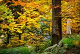 złota jesień jesienny las