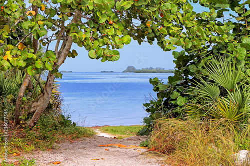 entrance to the beach between baygrape - 236677545