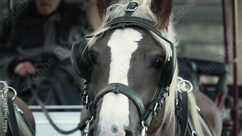 Close up of horse's face on a coach