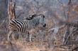 2 Zebras Africa