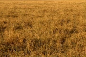 Yellow Grasslands © Faas