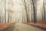 Path in city park on a cold and foggy November morning © e_polischuk