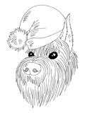 Dog a schnauzer face in a new year hat graphic black white isolated sketch illustration vector - 236741319