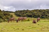 Hirsche im Hortons Plains Nationalpark auf Sri Lanka