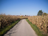 Road through a field to a church tower in autumn with blue sky and sun in Germany. Baden-Wuerttemberg - 236771305