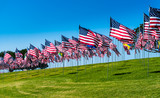 USA Flags Field