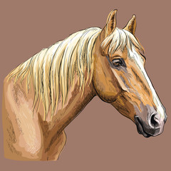 Colorful hand drawing Horse portrait-7 © alinart