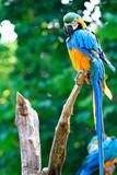 Pappagalli - Ara - giardino zoologico - uccelli - colorato