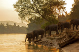 Asian wild family group Elephants walking in the natural river at deep forest at Kanchanburi province in Thailand