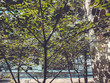 Green blossom trees in the city yard in suny day. Close up shot