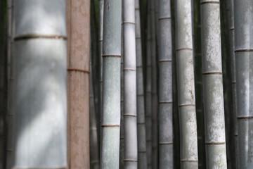 bamboo close up © Aleksandar