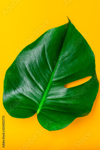 Bright green leaf of monstera on yellow background. Vertical - 236923775