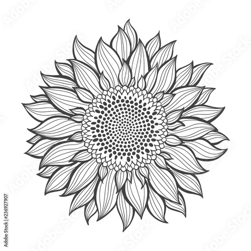 Sunflower.Sketch. Hand draw vector illustration, isolated ...