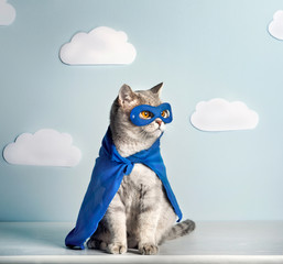 Superhero Cat