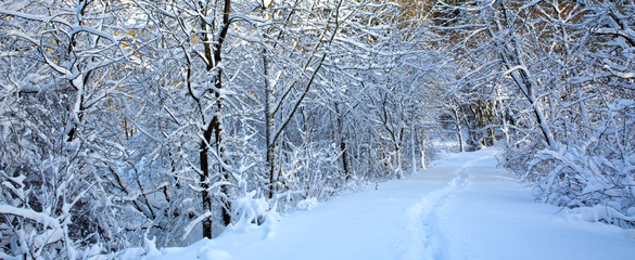 Winter landscape with snow covered trees . Nature background. © Swetlana Wall
