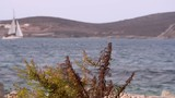 Lockdown: Lovely View of a Shrub on the Shore of a Bay with a Sailboat - 236955121